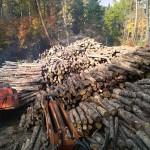 間伐の必要性
